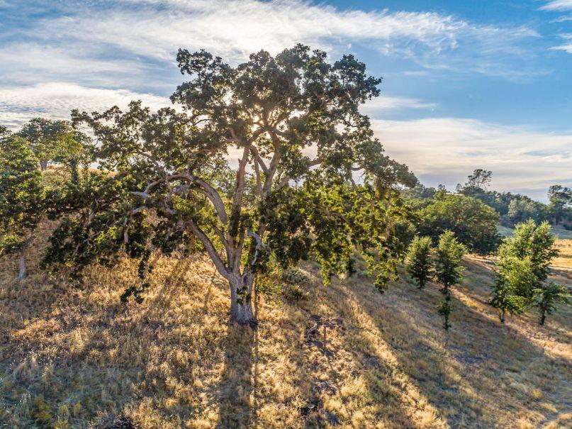 Creston Ranch For Sale - Horse Property For Sale - O'Donovan Road, Creston, California