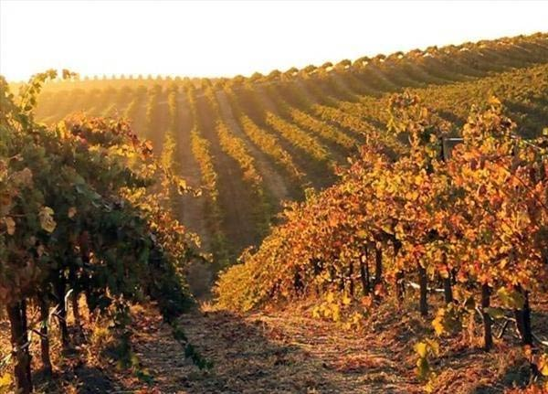 Paso Robles AVA Large Vineyard For Sale - San Miguel - Pine Hawk Vineyard - Biodynamic / Stellar Organic Certified