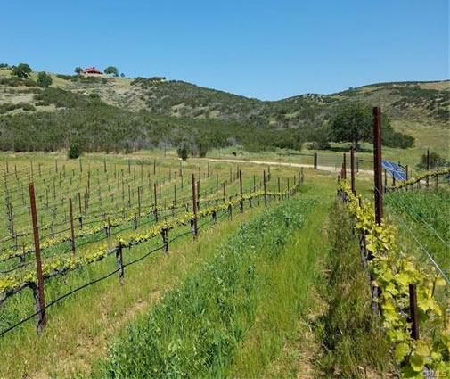 Monterey Country Ranch, Vineyard and Luxury Home For Sale