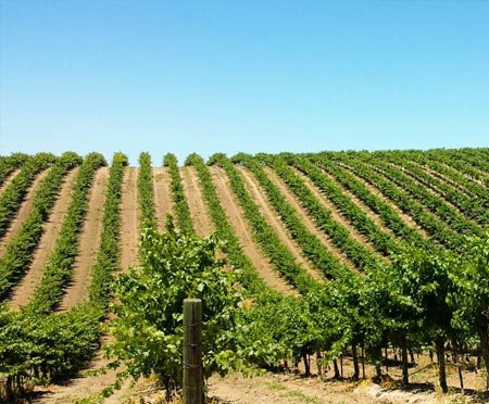 Paso Robles Vineyard and Farmhouse For Sale - Paso Robles AVA - Rustic Barn & Land