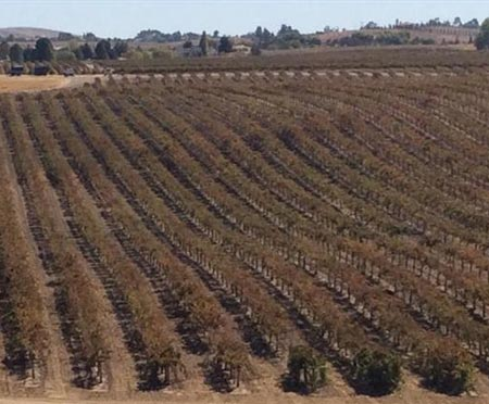 Paso Robles Vineyard For Sale - 124 Acres Planted - 17 Parcel Subdivision - San Luis Obispo County